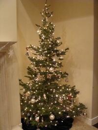 Christmas_tree_2008_2